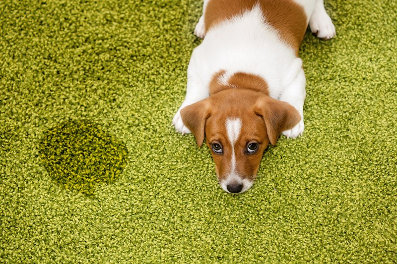 How do you choose the best flooring for pets that have accidents?