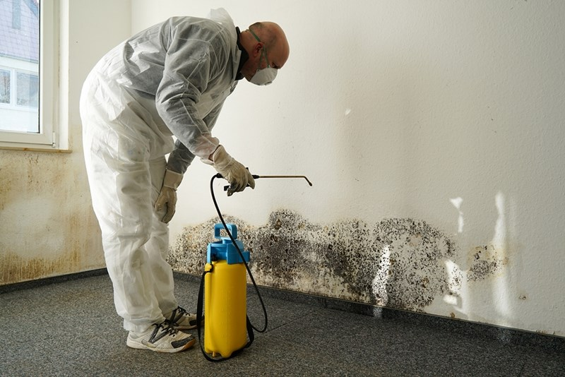 What will the best mold removal company do in your home in NJ?