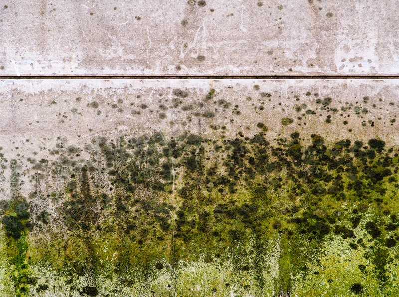 How do i deal with mold on outside walls - How to deal with mold ...