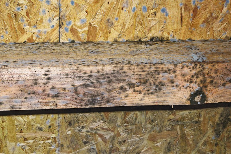 What is the Best Way to Kill Black Mold on Wood?