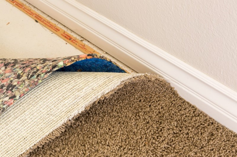 Mold – Does it Lurk Beneath Your Carpet?