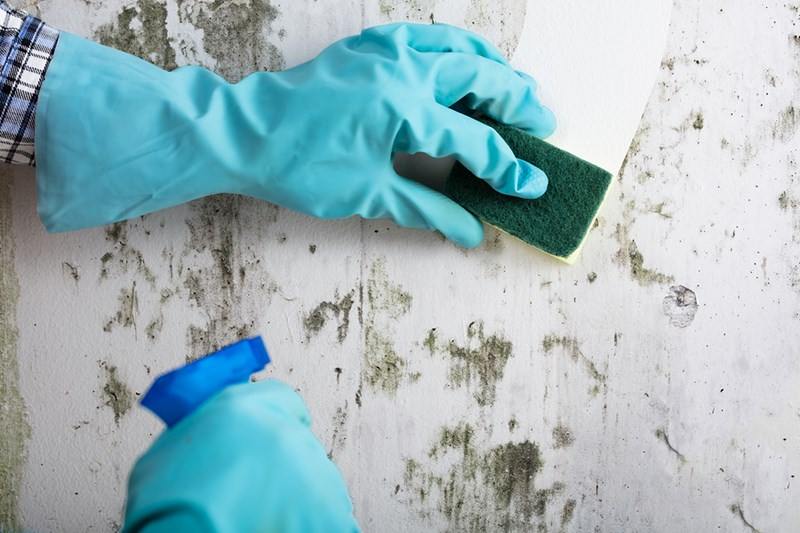 Does Vinegar Really Kill Mold?