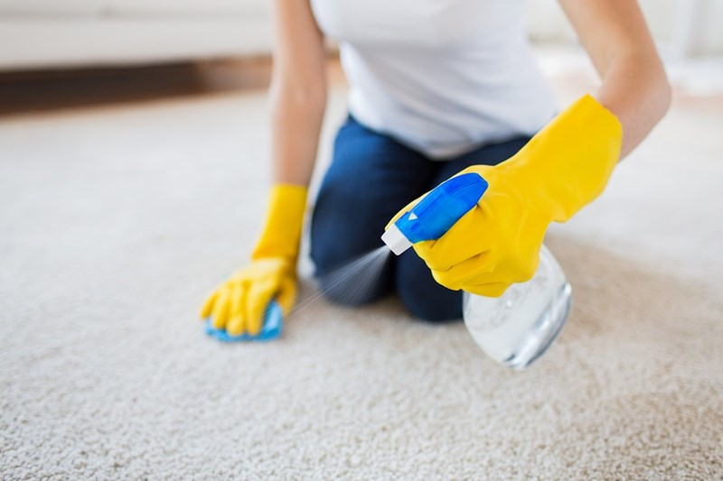 Cleaning 101: How Do I Remove Mold From My Carpet