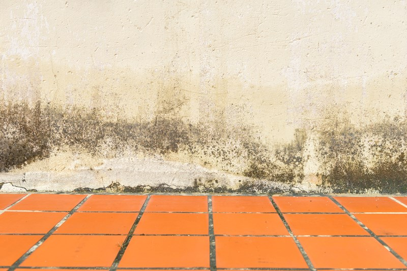 Common Mistakes to Avoid When Walls are Attacked by Mildew