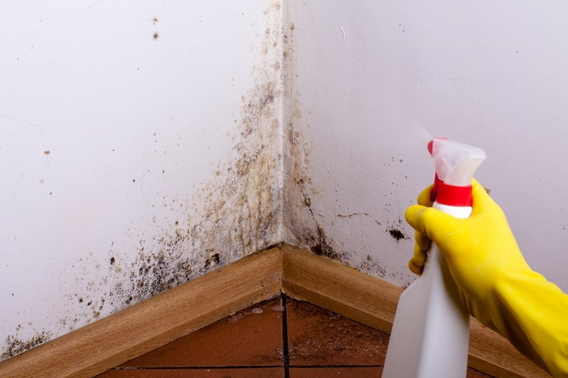 The Ultimate Guide on How to Clean Mold on Drywall