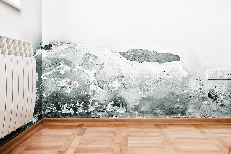 How to Get Rid of Mold in Your House in 4 Steps