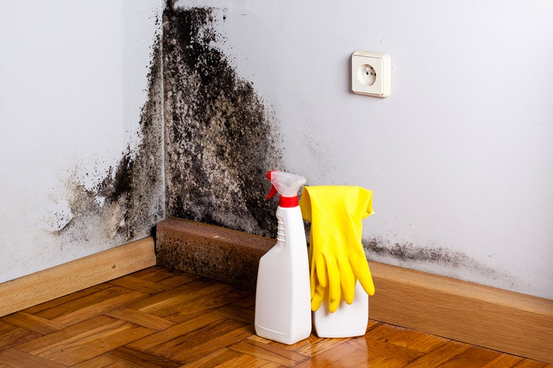 Nix Your Mildew Problems In 7 Easy Steps
