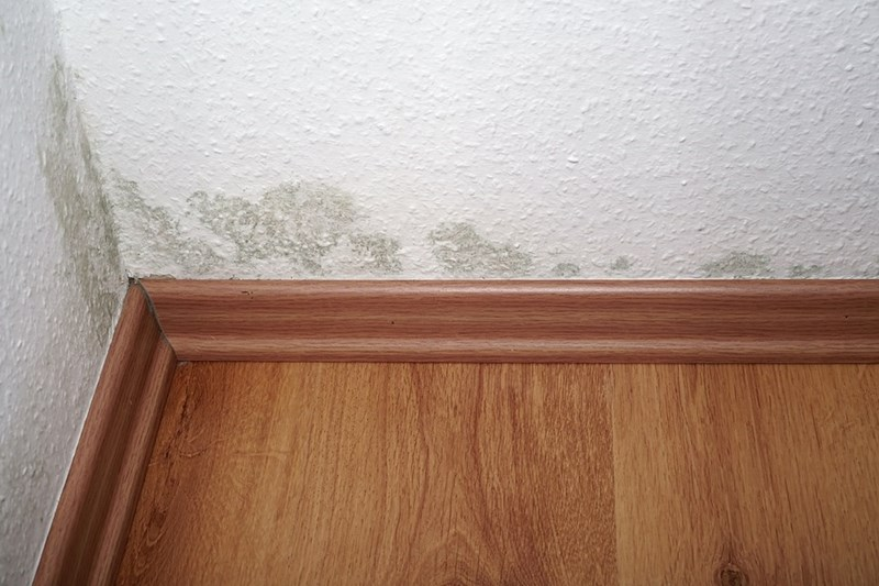 What to do if you Find Mold in your Apartment in 5 Steps